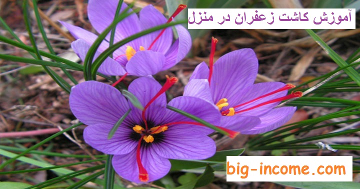 آموزش پرورش زعفران