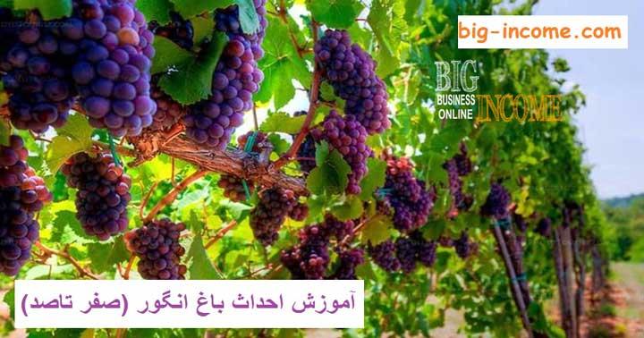 نگهداری از باغ انگور